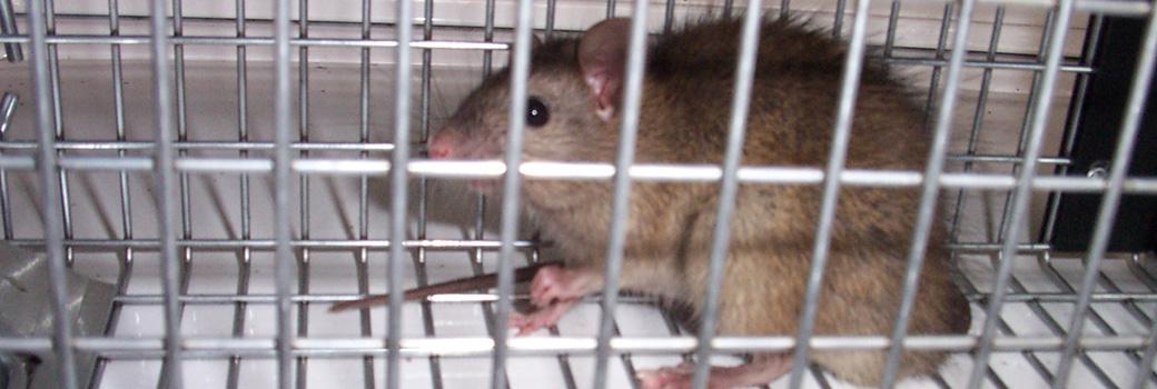 Rat Repellent Moth Ammonia Lowes Sound